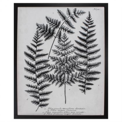 Charcoal Fern framed art print from Propac Images, available at Pine Tree Barn