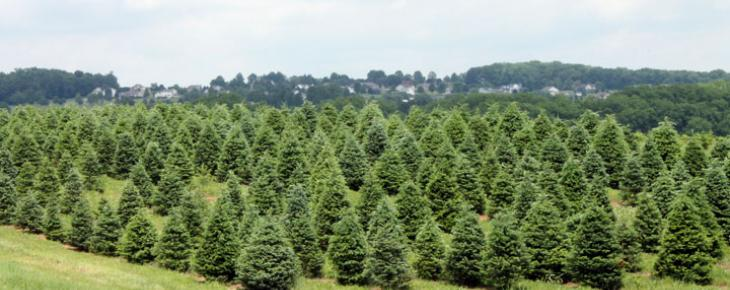 Large Christmas Tree Stands
